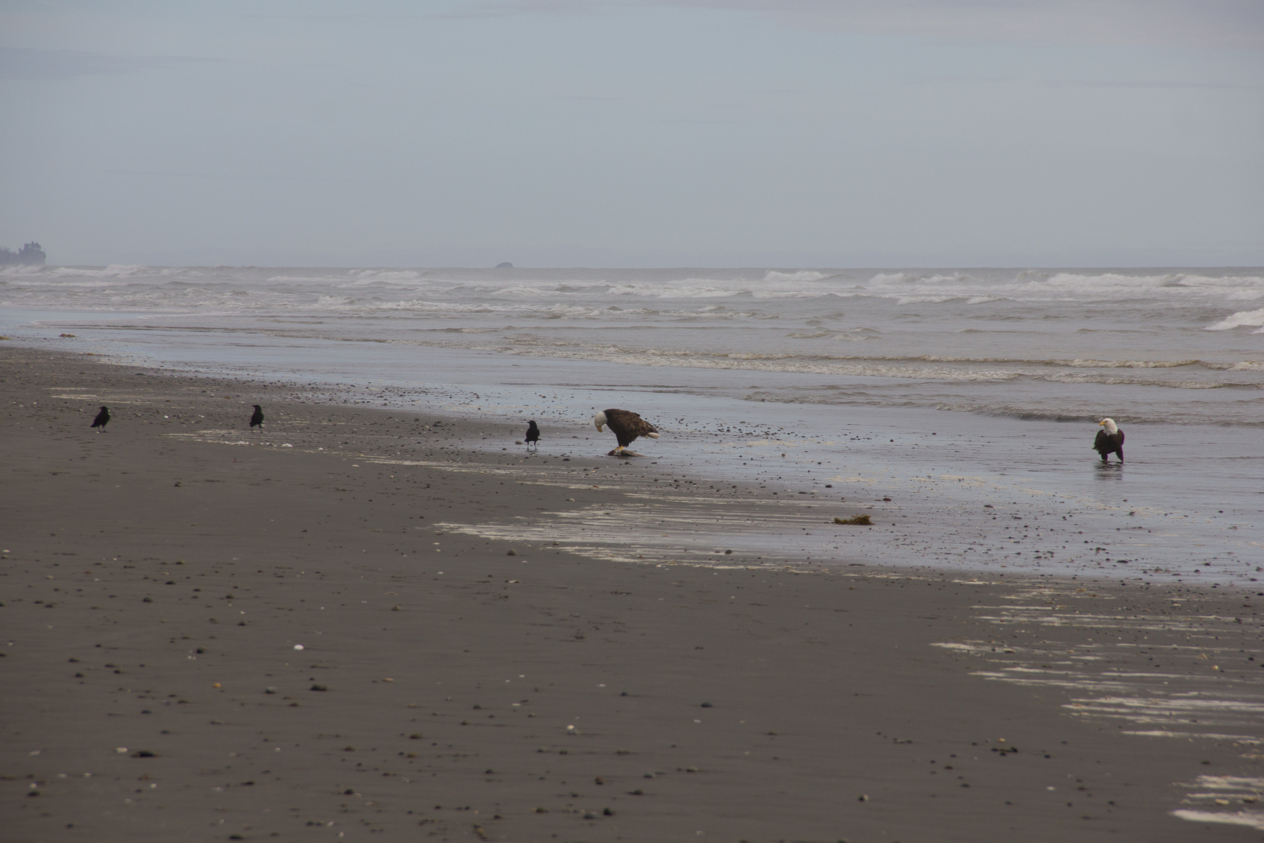 Mmmm, seagull!