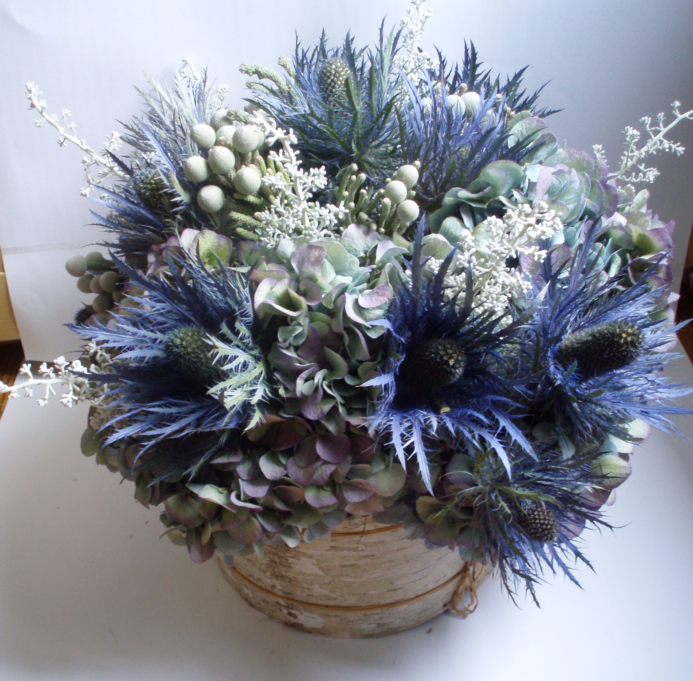bluebirch.JPG