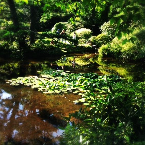 [Asticou Azalea Garden in Northeast Harbor, Maine]