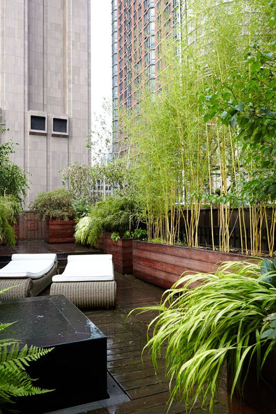 Nyc Backyard Rooftop Garden Designer For The Beautifully Wild