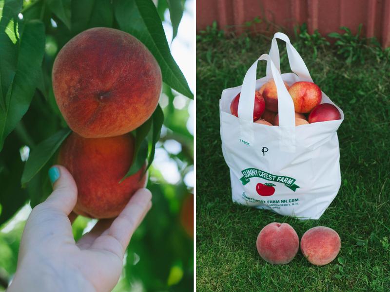 peachharvest3.jpg