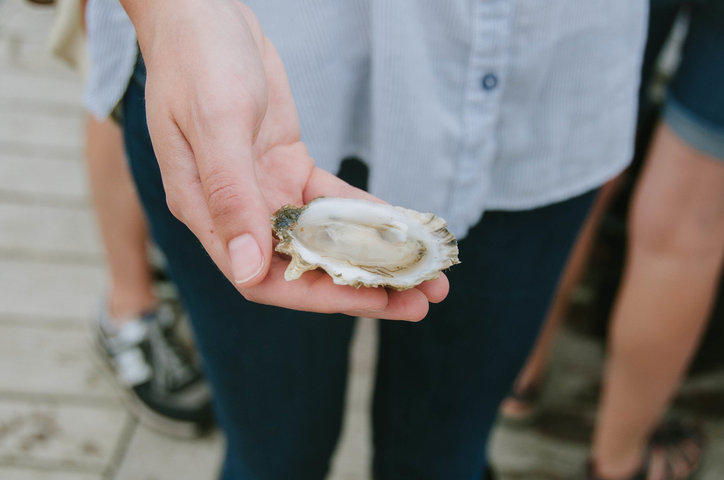 - Meet Your Farmer -   Island Creek Oyster Farm    Read Article