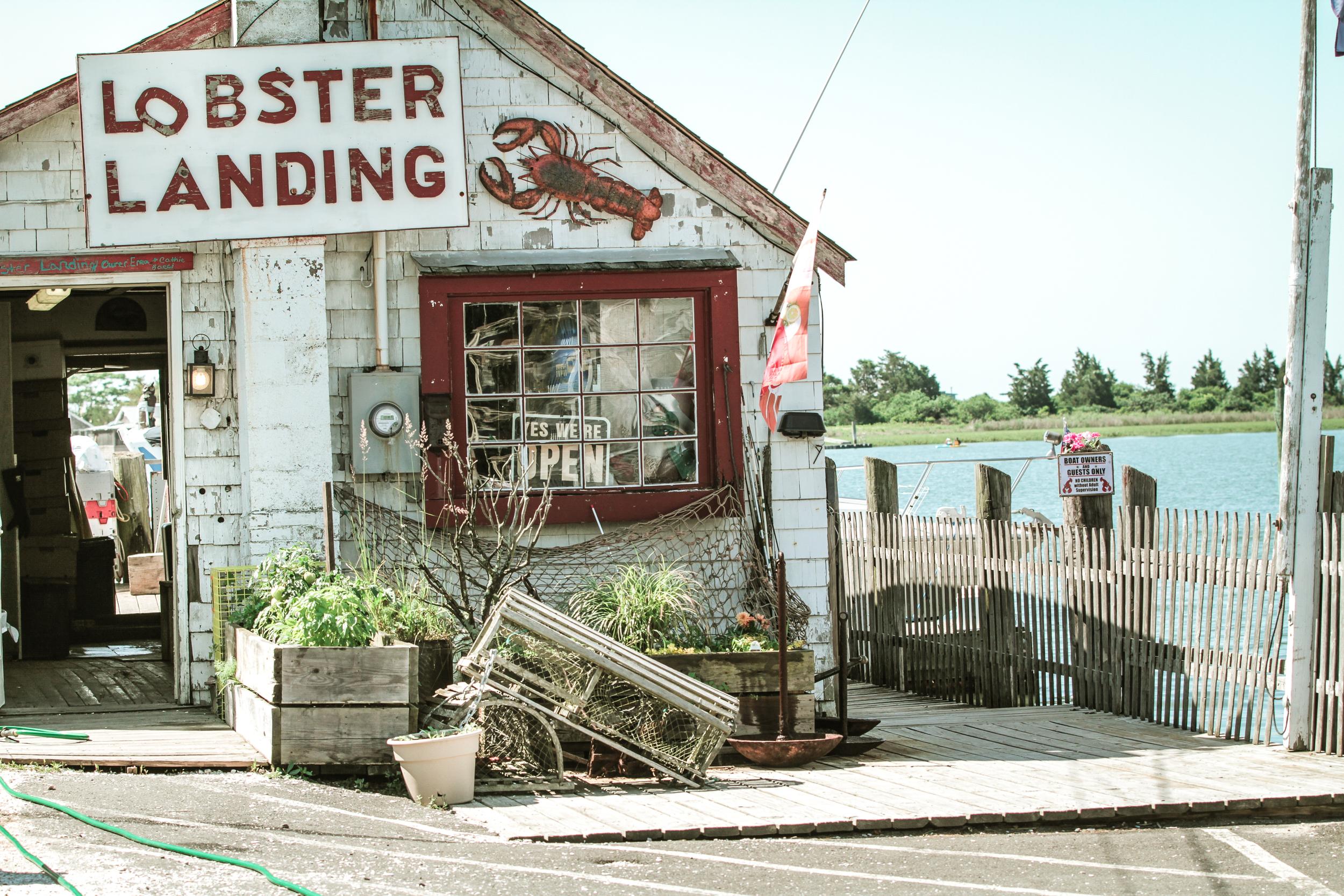 Lobster Landing-3.jpg