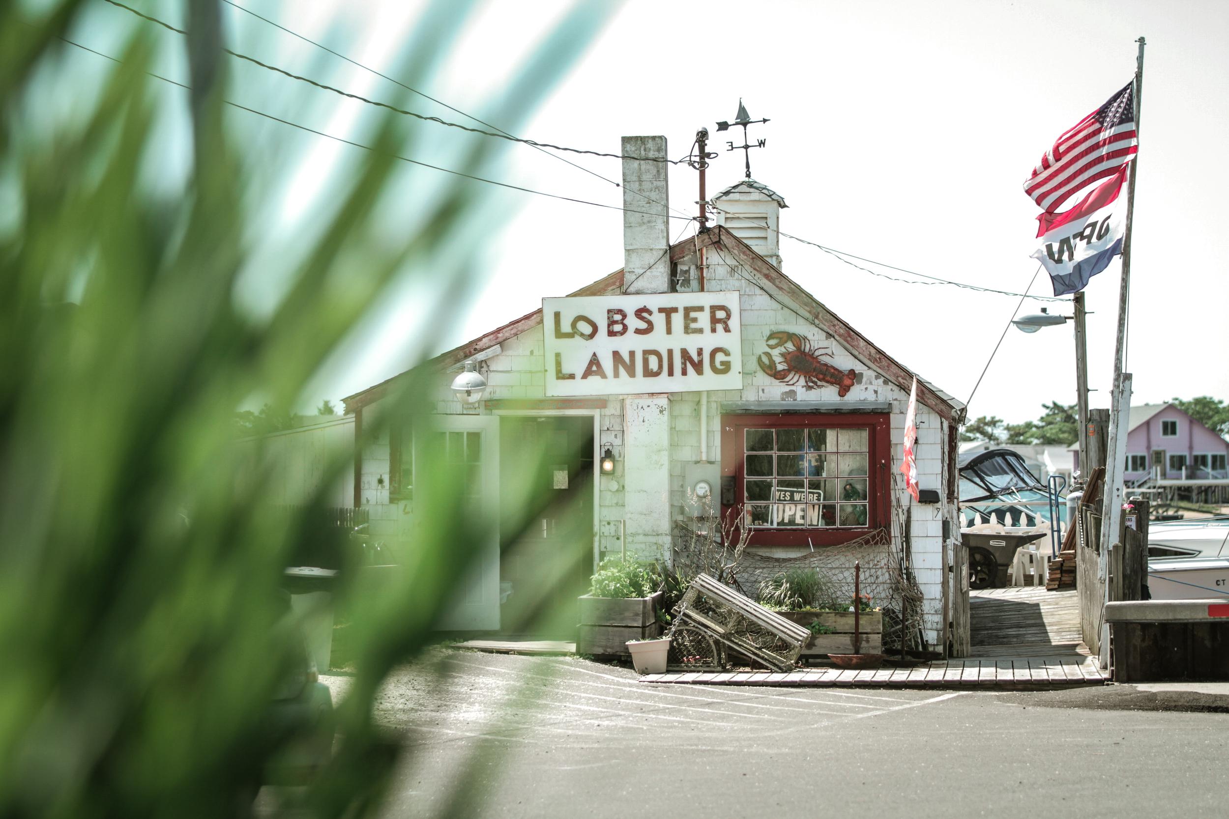 Lobster Landing   Story by Chelsea Moore