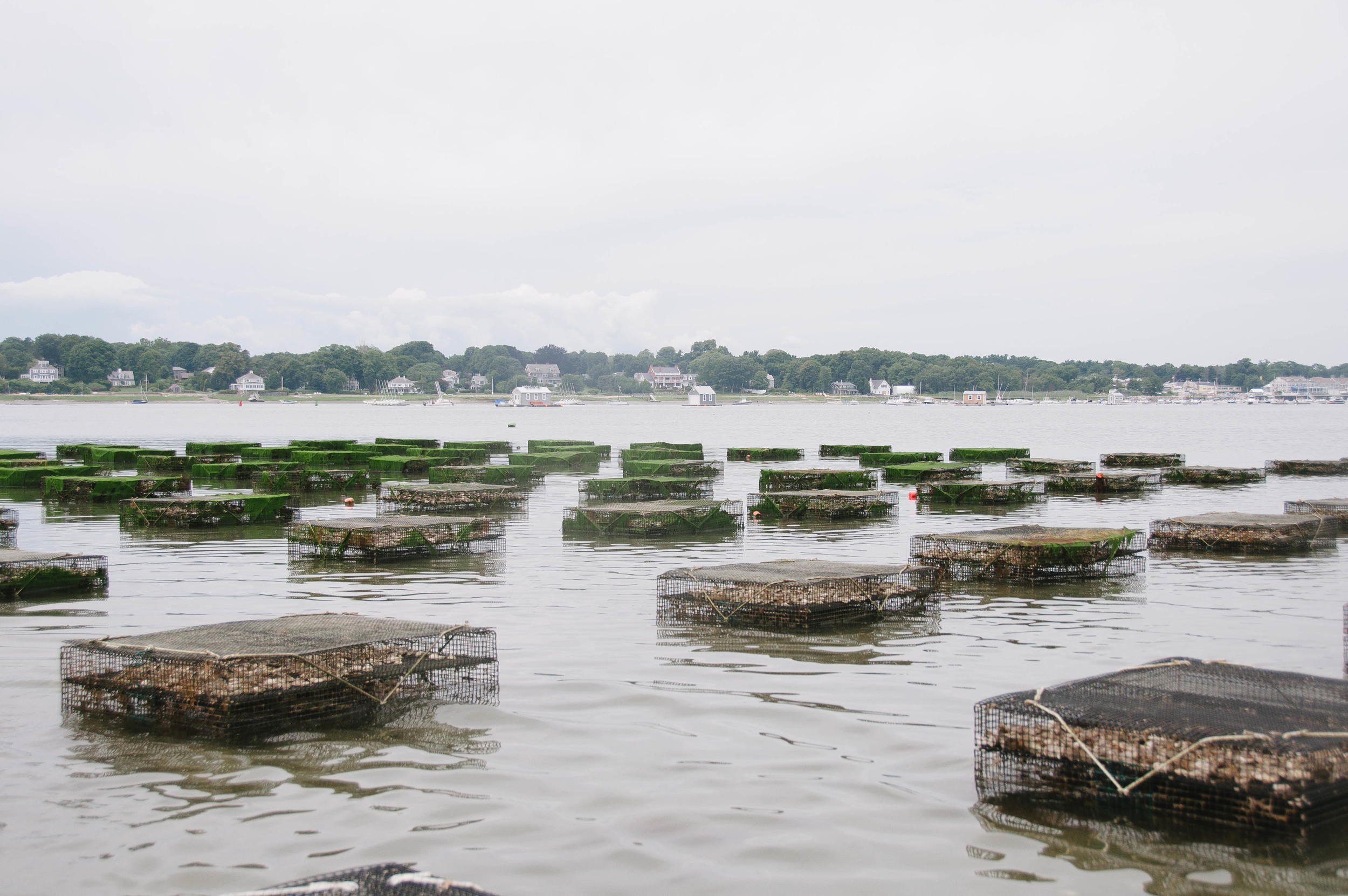 Island Creek Oyster Farm