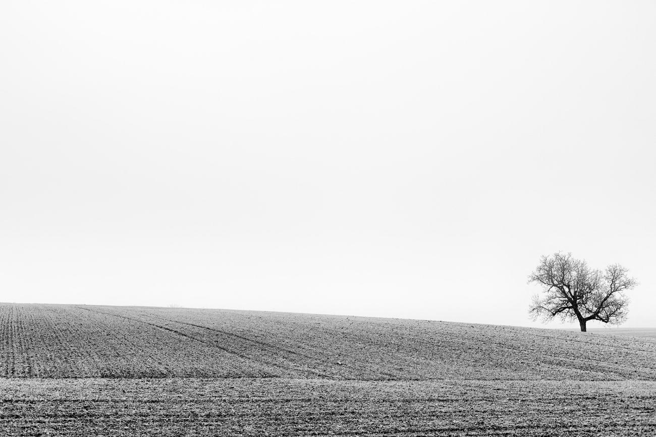 Silhouette d'un arbre en hiver
