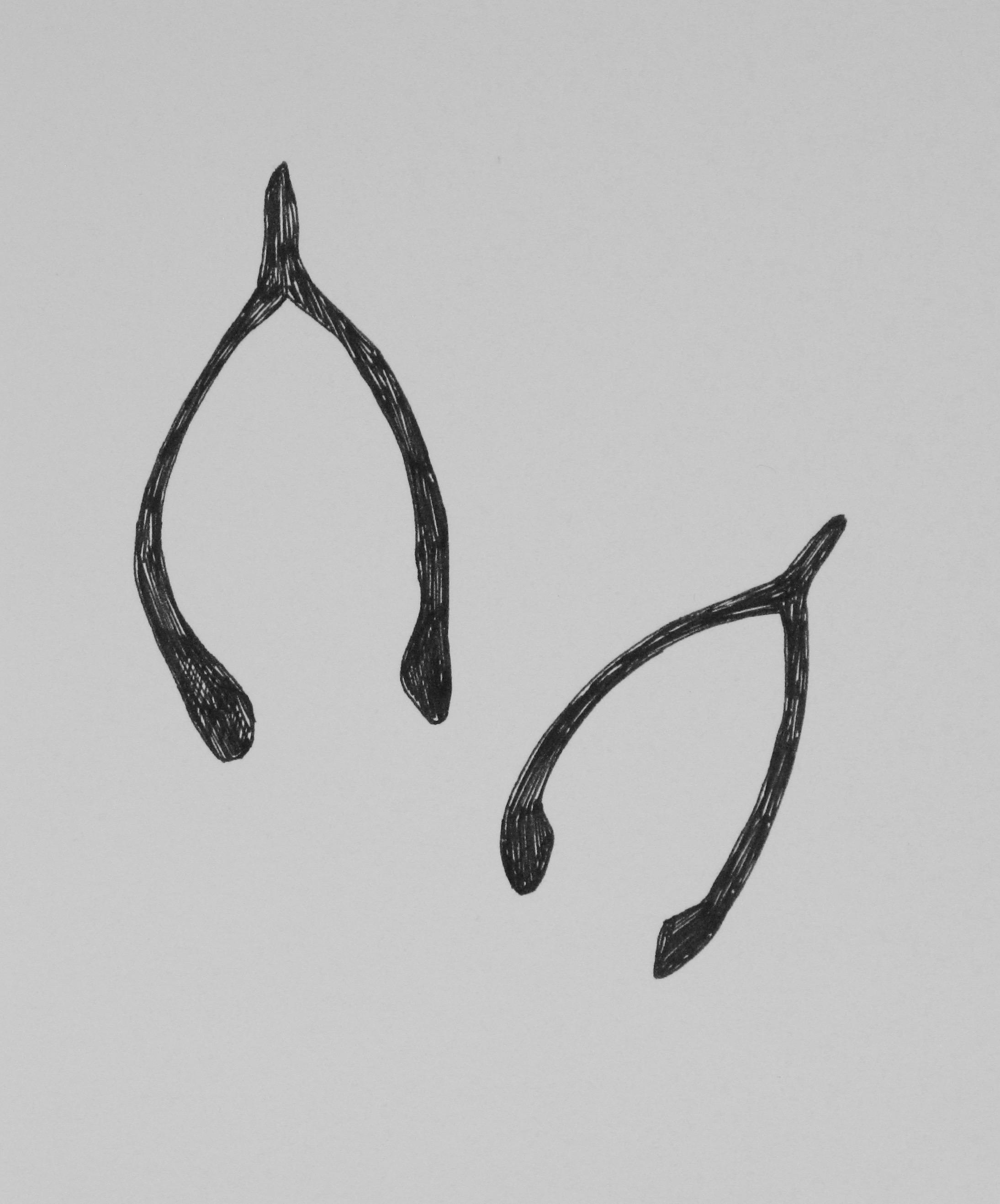 Wishbone. 2015. Ink on Paper
