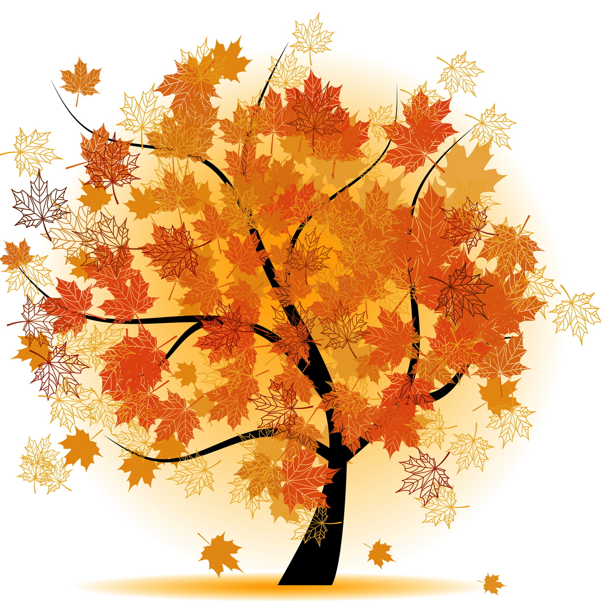 Maple tree, autumn leaf fall.jpg