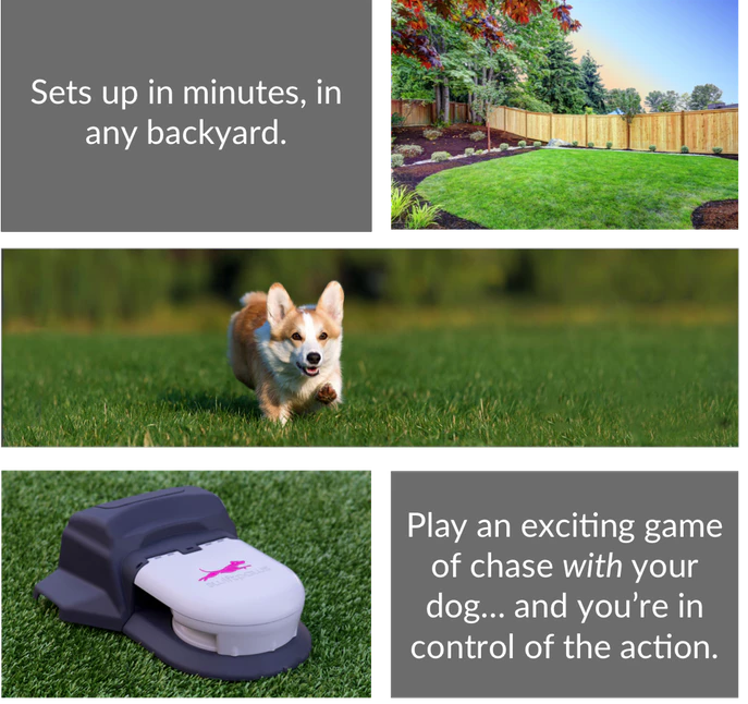 SwiftPaws_-_Capture_the_Flag_for_Dogs_by_swiftpaws_—_Kickstarter.png