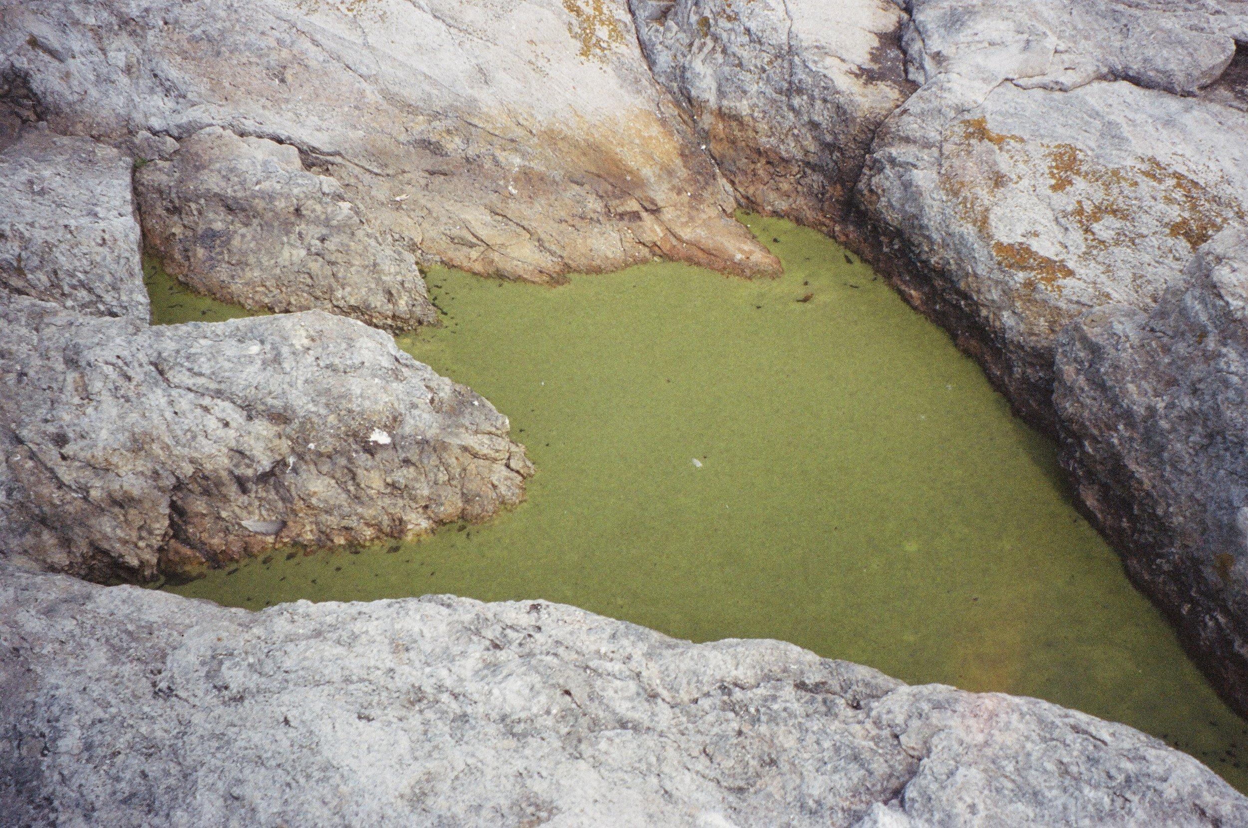 Green muck.JPG