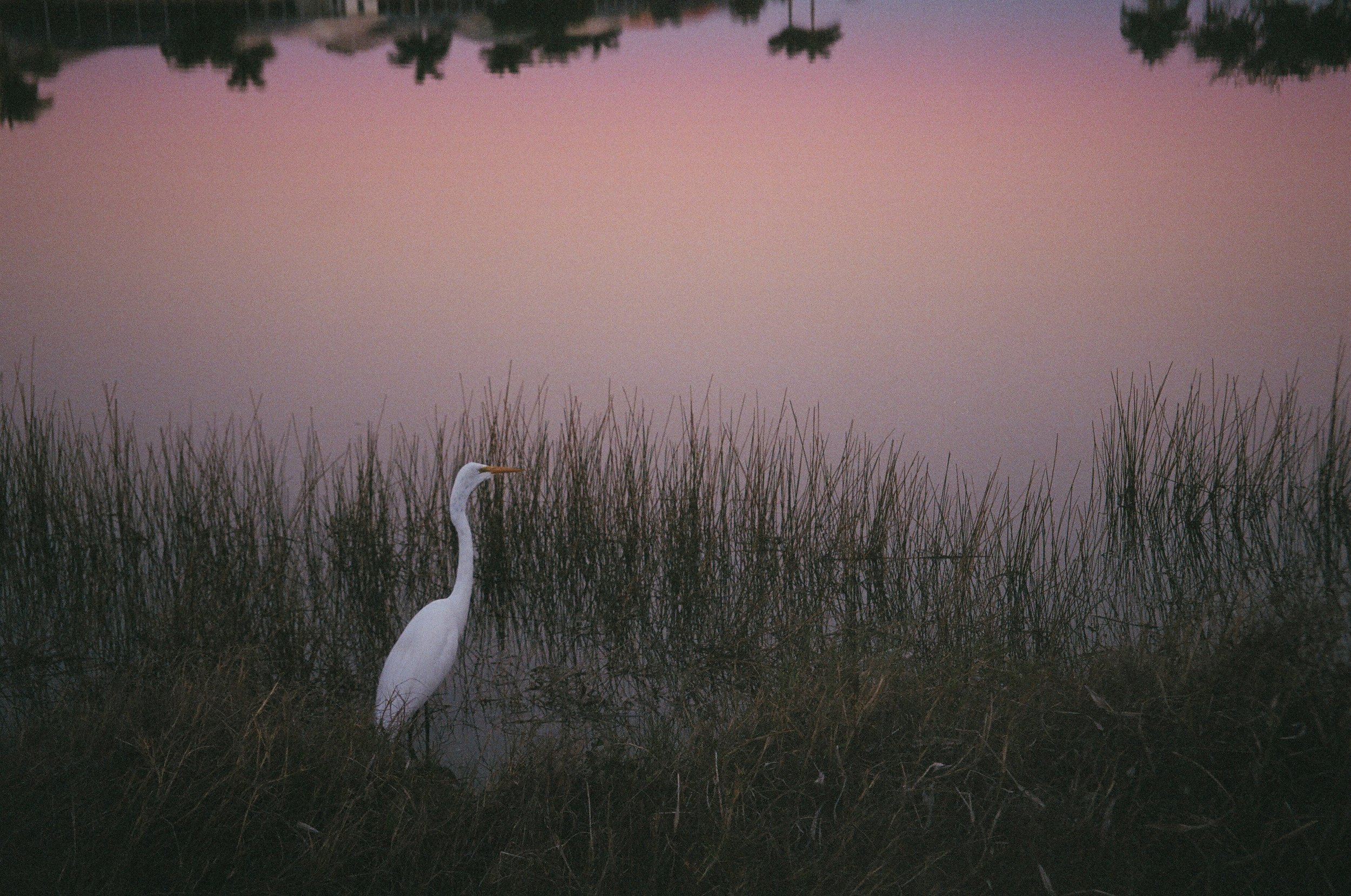 white bird and sunset.JPG