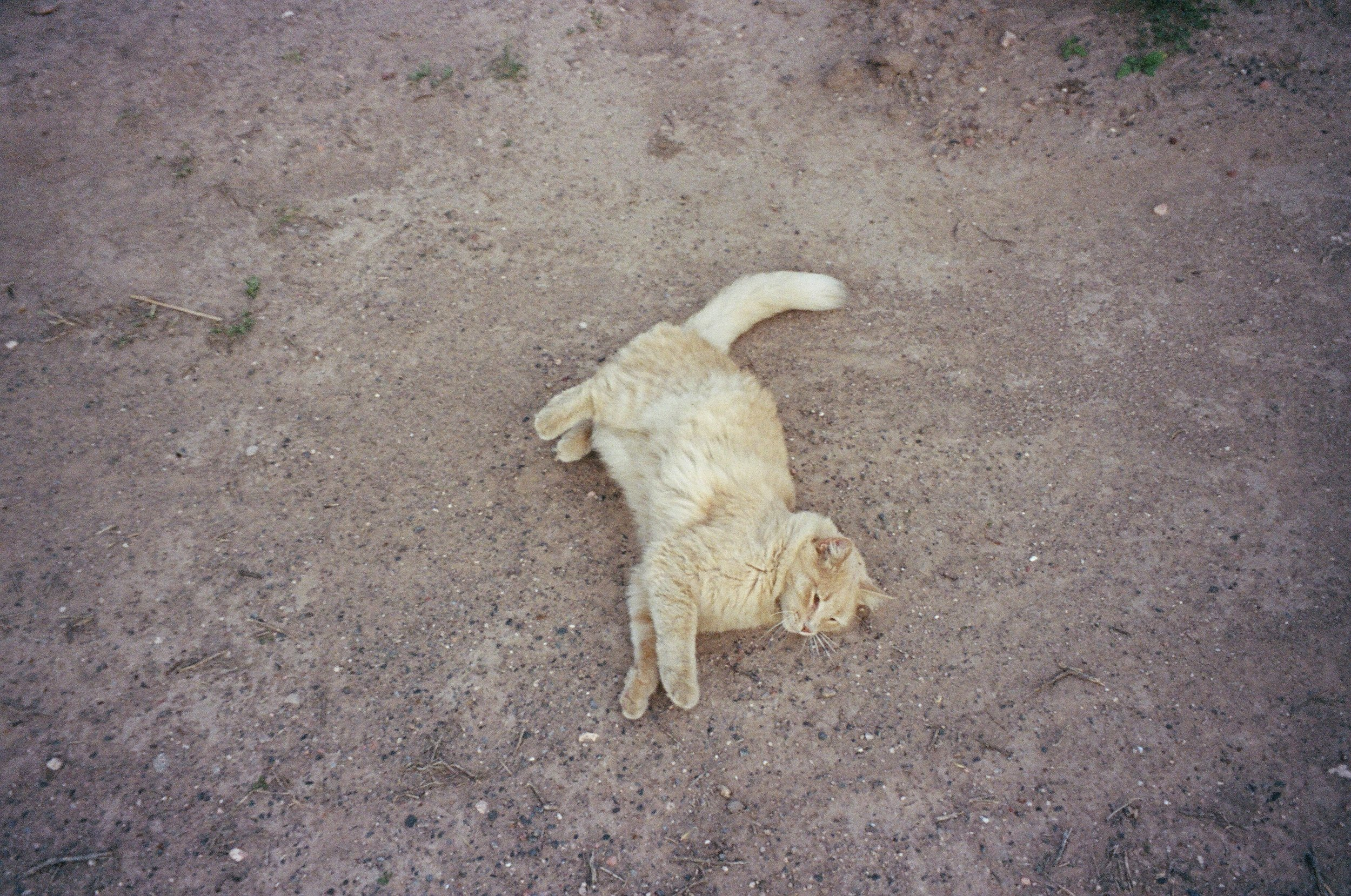 Cat in Marfa.JPG