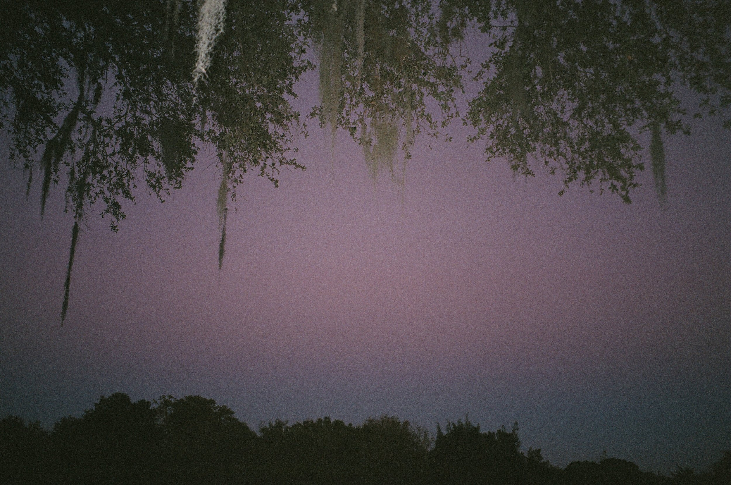 spanish moss and purple sky.JPG