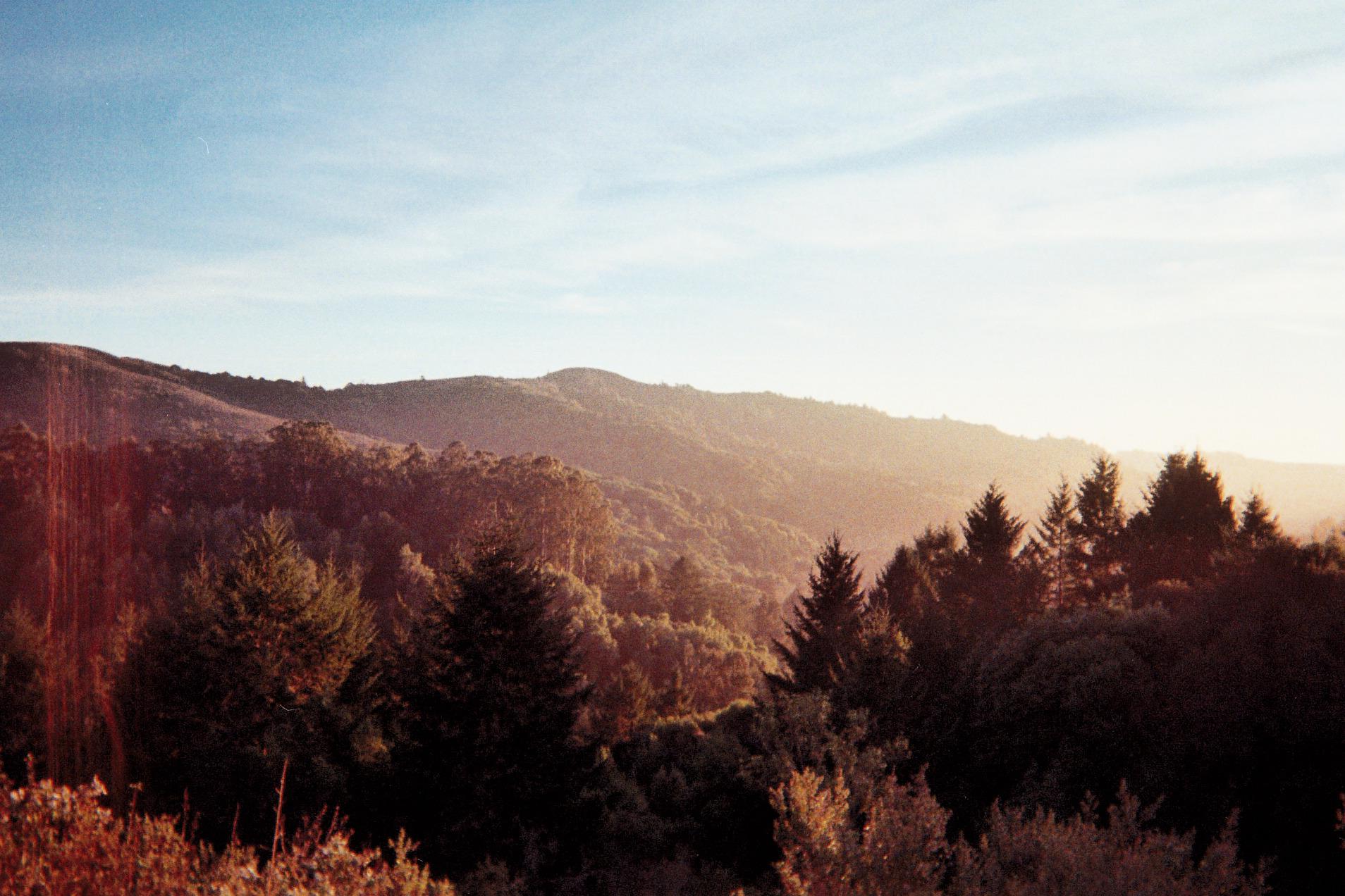 treesandsunlight1.jpg