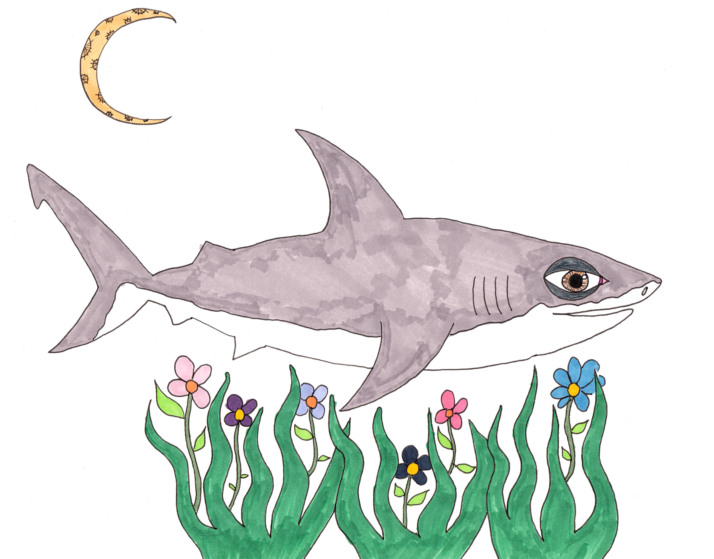 Shark for grant crop .jpg