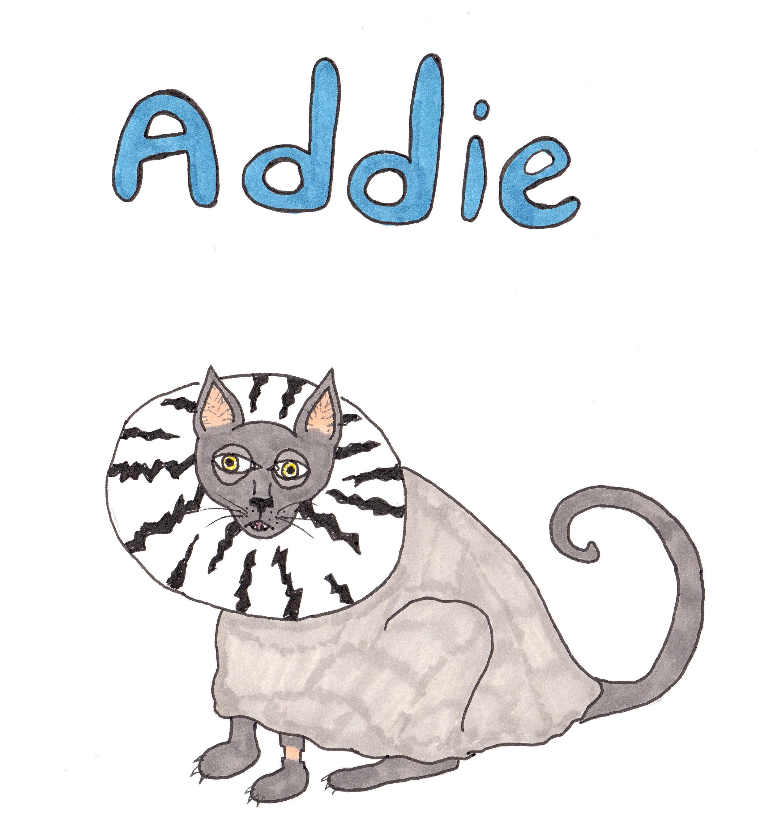 Addie the cat cropped.jpg