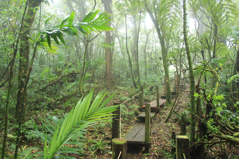 Mombacho Volcano Hike & Zipline Tour -