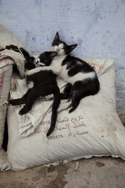 Cats on Bag 1.jpg