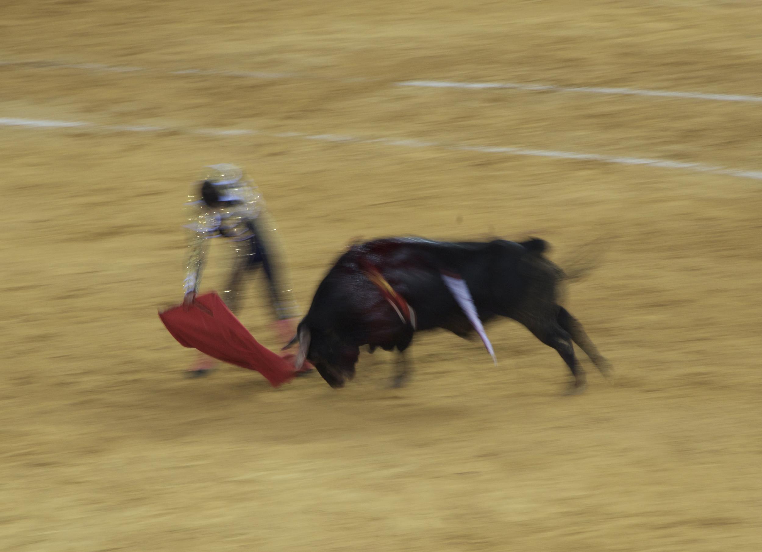 nikon bullfight 9 copy.jpg