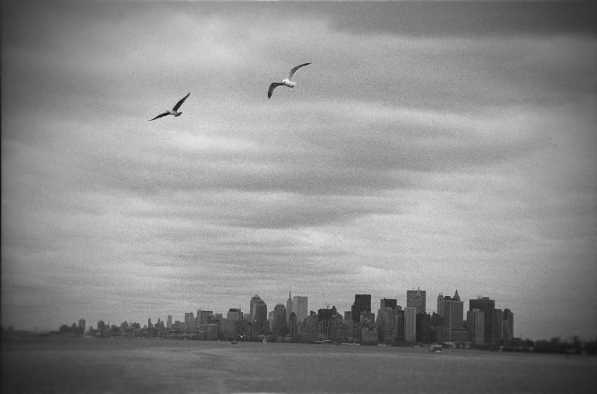 NYCand Gulls.jpg