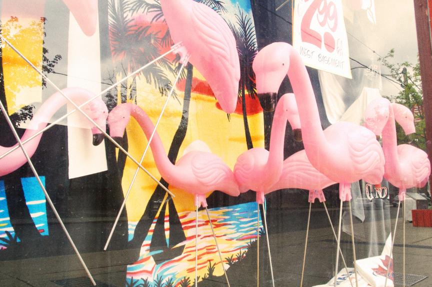 Eds Flamingos.jpg
