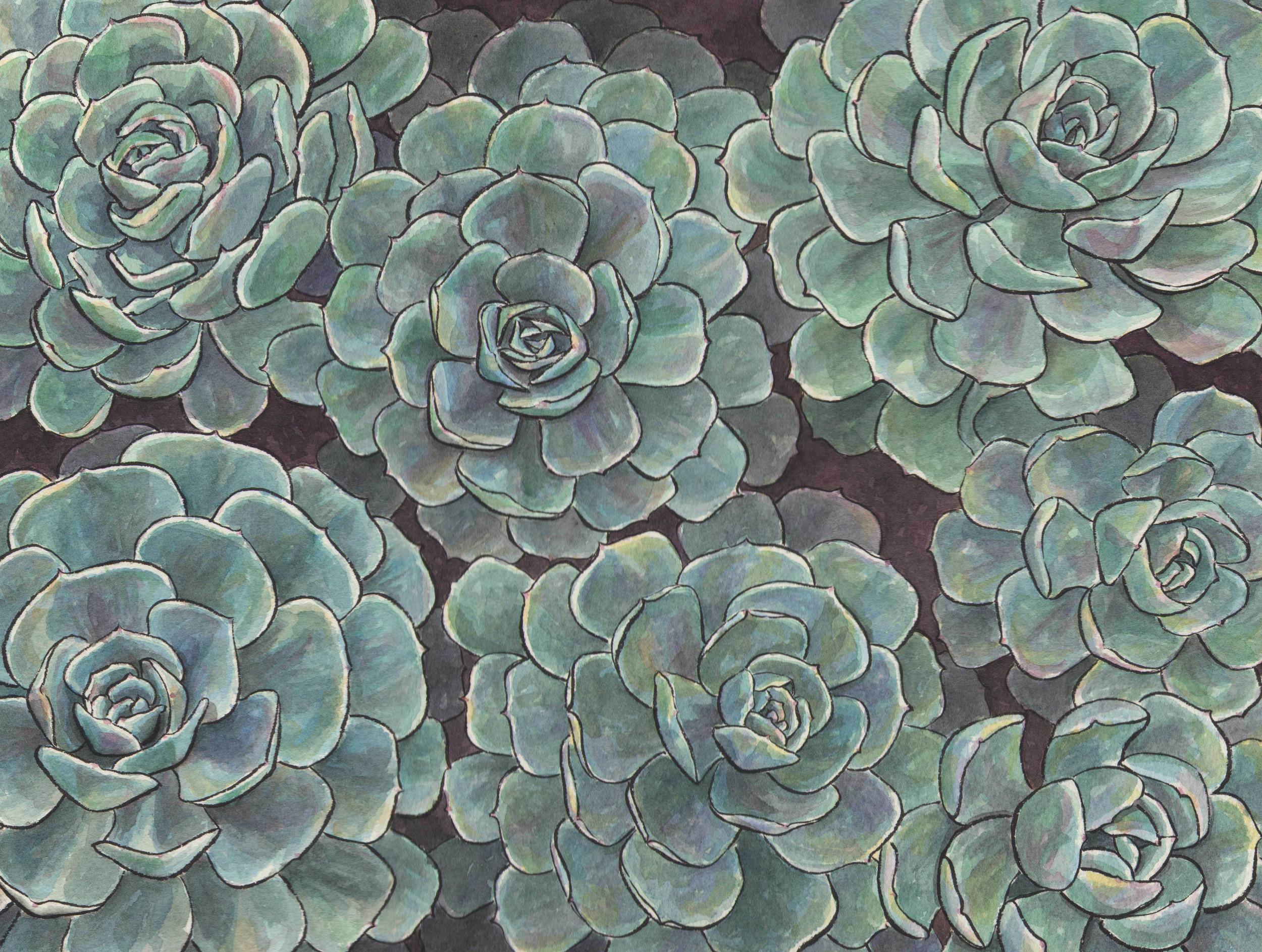 echeveria1_web_cropped.jpg