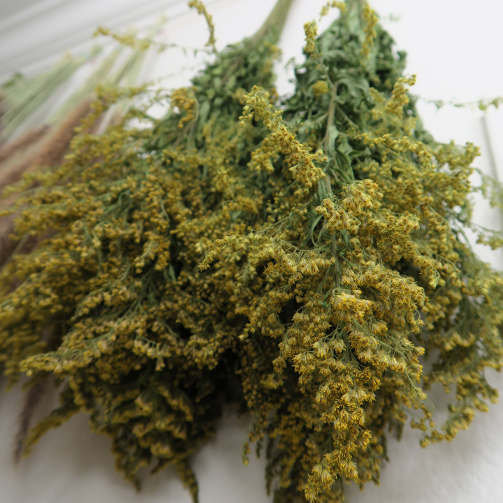 Solidago Flower Meaning : good luck, good fortune, growth, success, motivation.