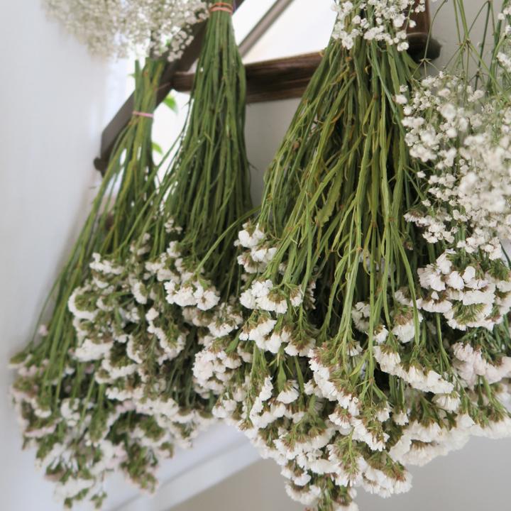 Statice Flower Meaning : (white) trust, truth, innocence