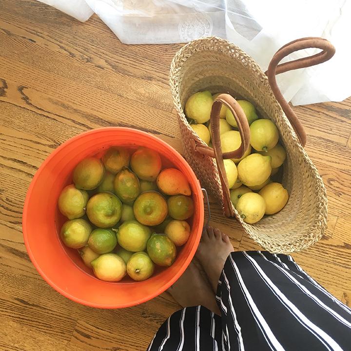 lemons from my lemon tree
