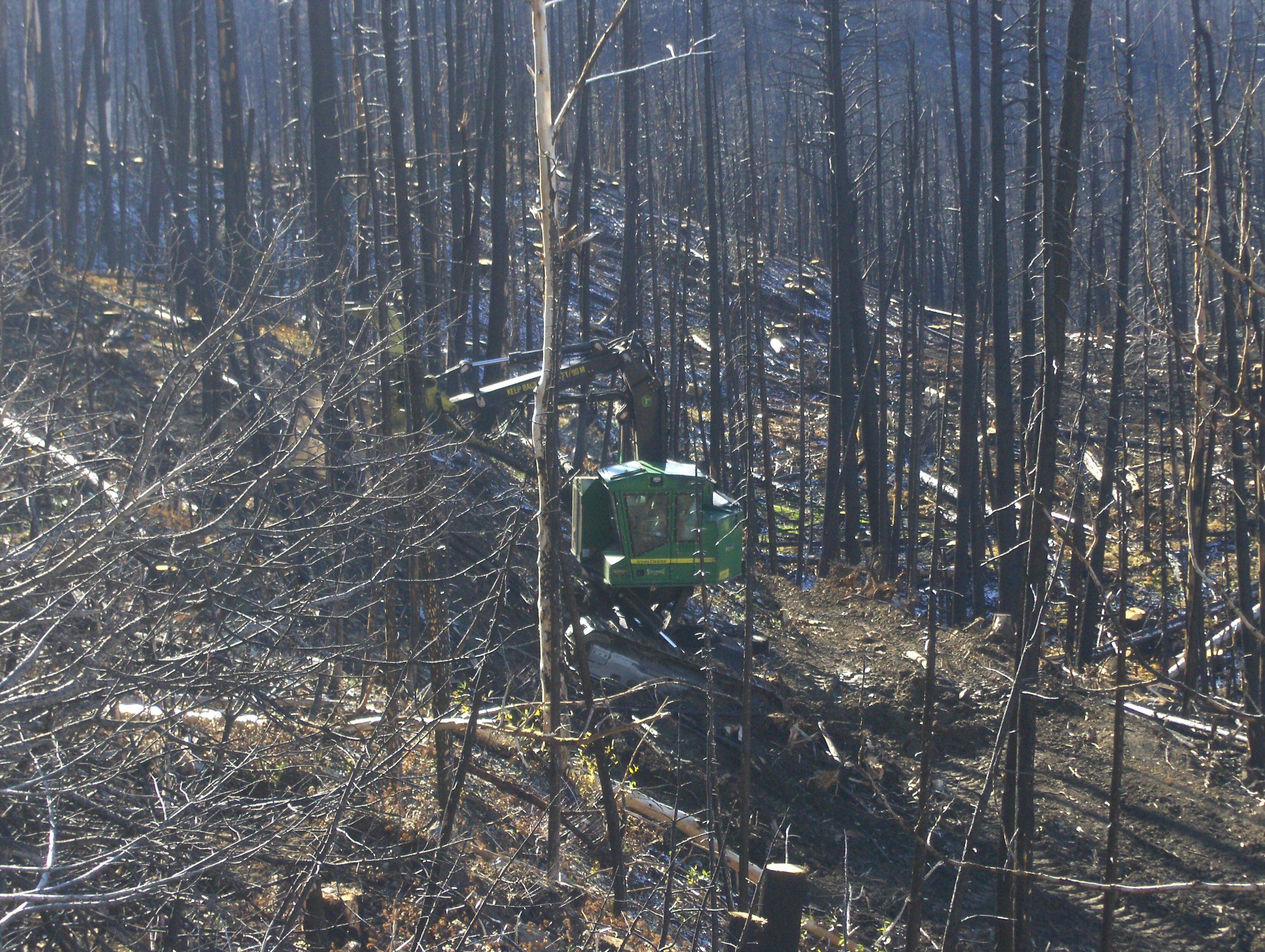 Steve Jones cutting salvage Burn next to Glacier Park