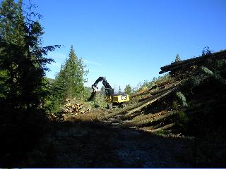 Danielson Logging's new 568 shovel logger