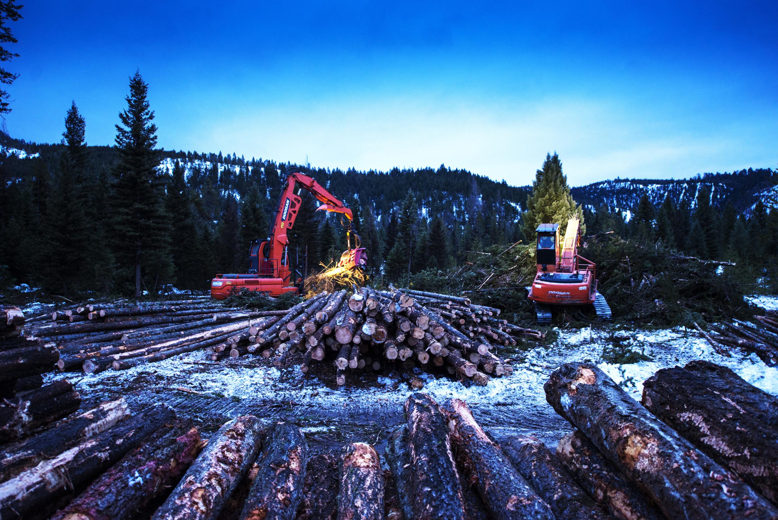 225 DX Doosan W 622C Waratah Processing Head – Operator/Owner: Mike Newton Doosan 225LL Log Loader – Operator: Todd Boehler, Employee of Newton Logging, Inc.