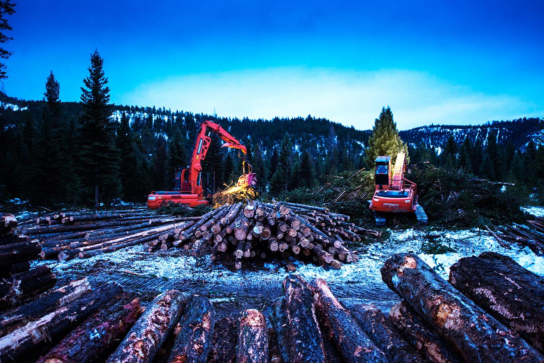 225 DX Doosan W 622C Waratah processing head & Doosan 225LL log loader