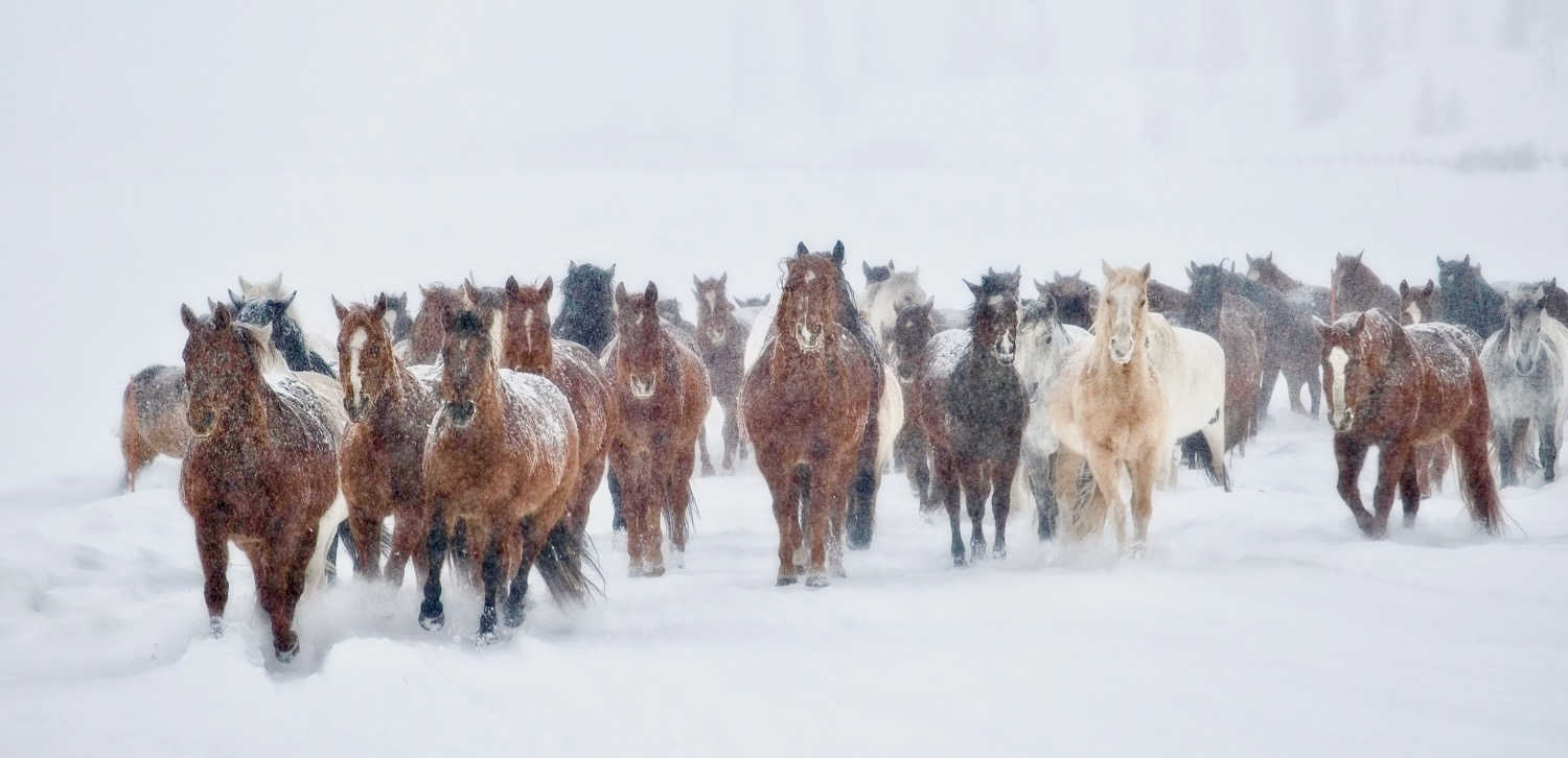 With over 110 head of horses you will easily capture a great shot. Check out  Vista Verde Website