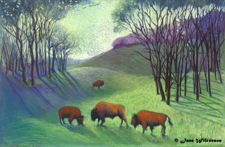 Woodland Bison