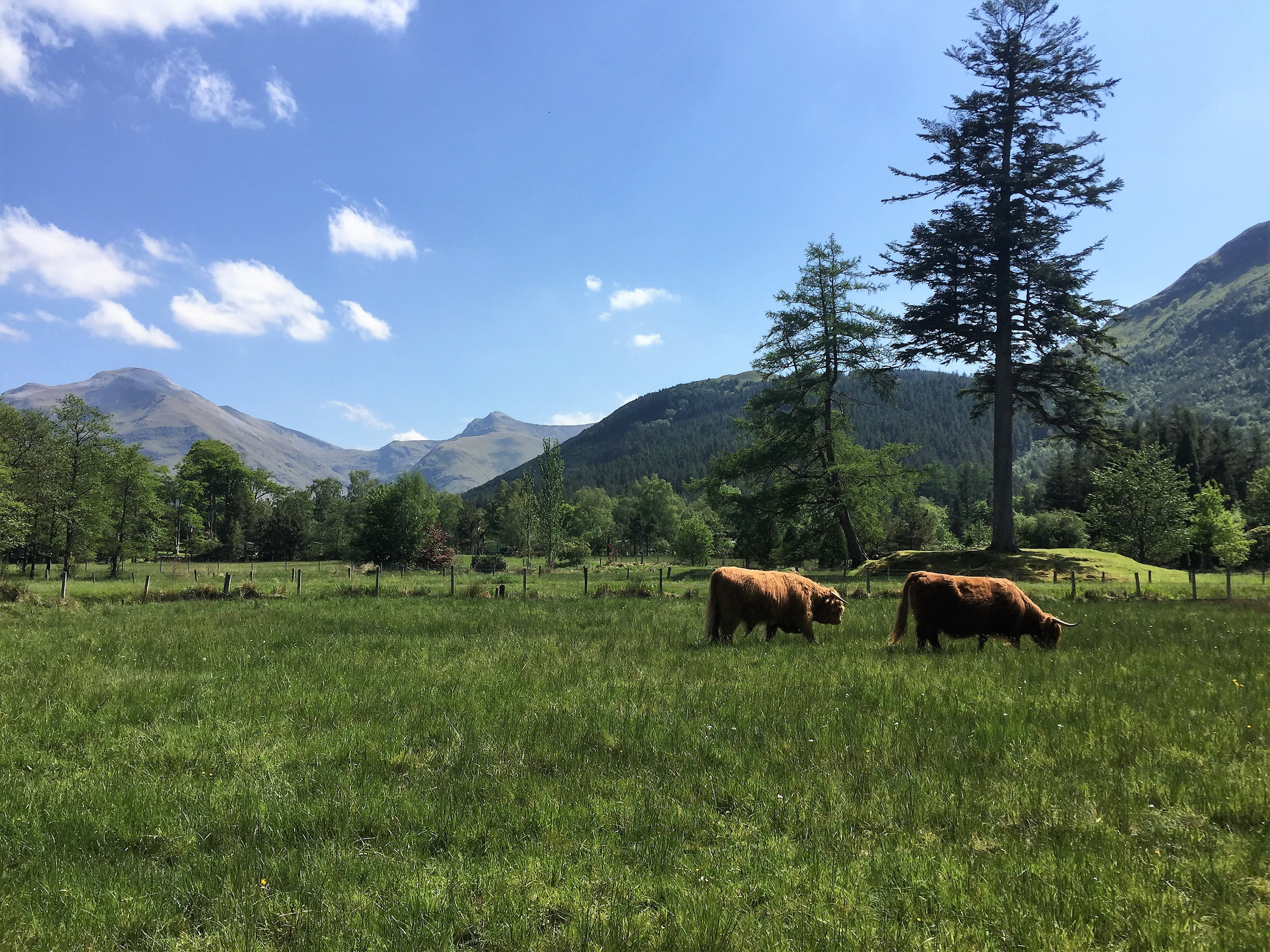 Summer Coos in Park-WEB.jpg