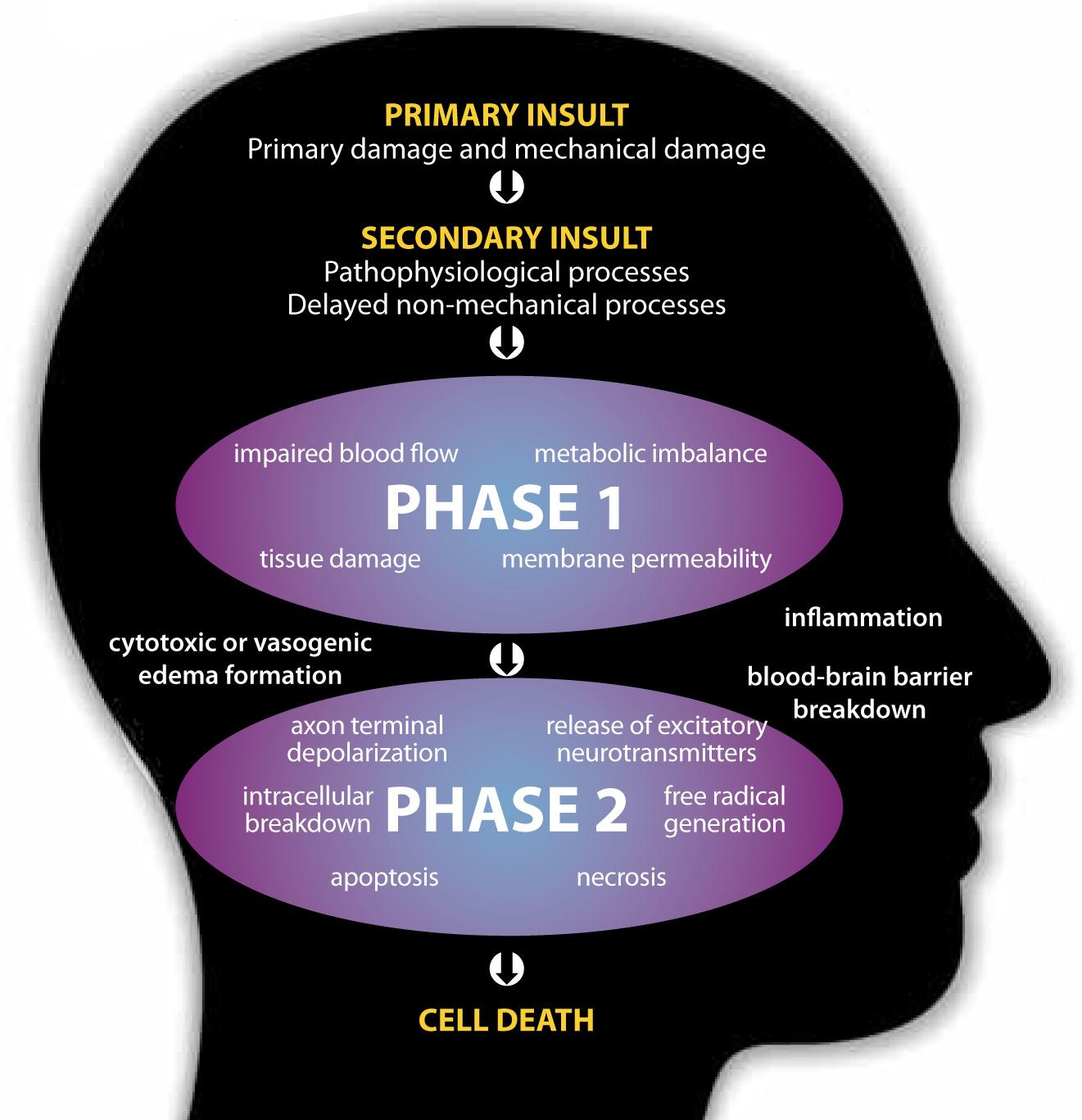 Source: http://www.rainbowrehab.com/neuroplasticity-aquired-brain-injury/