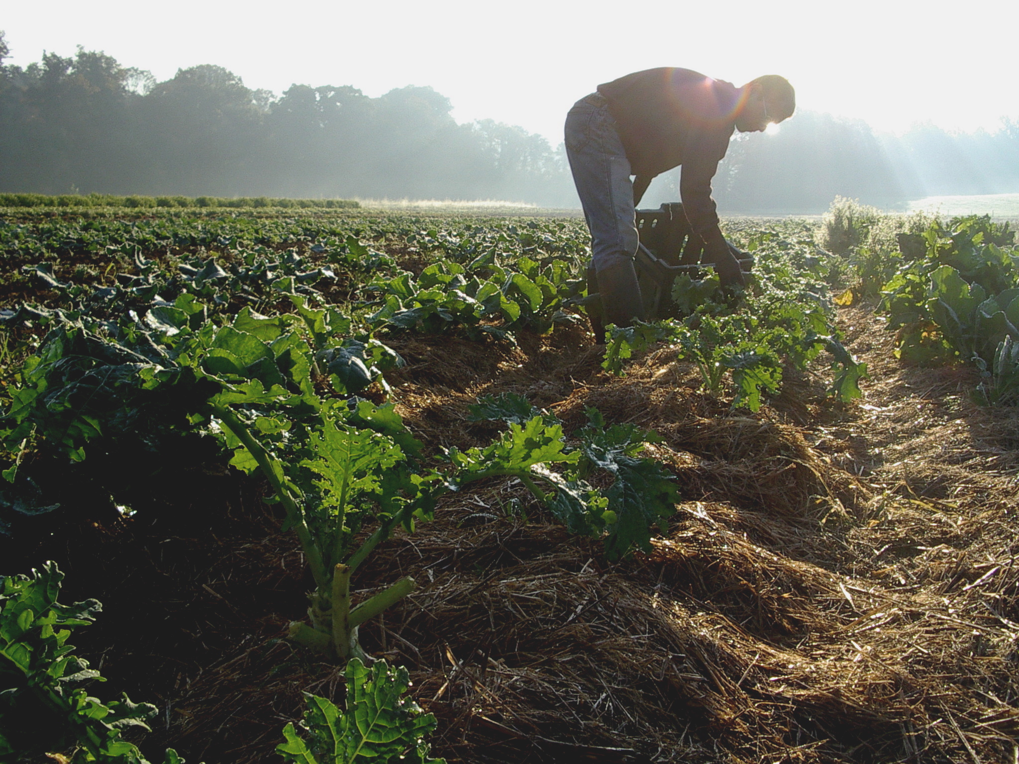 biodynamic-farming.jpg
