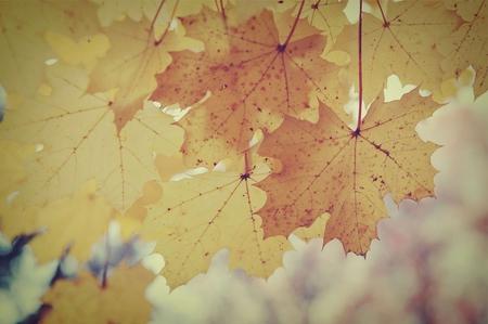 Vintage Fall 3.jpg