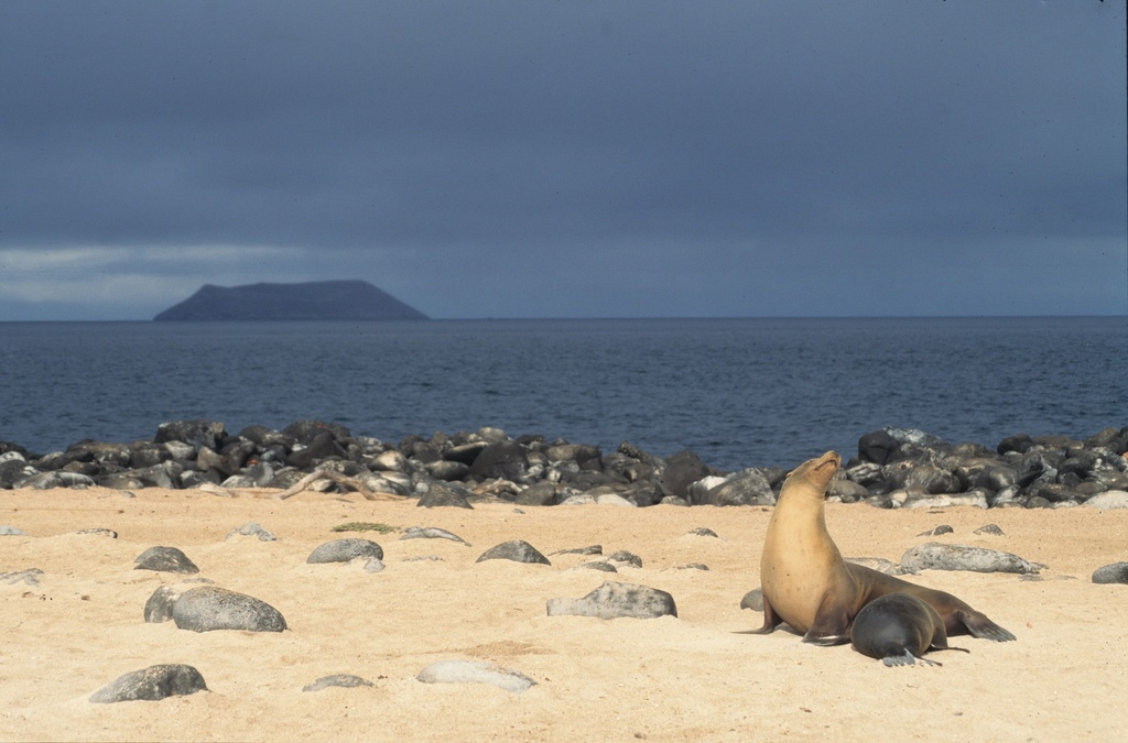 Galapagos sea lion nursing, Gal�pagos Islands, Ecuador - nursery with a view