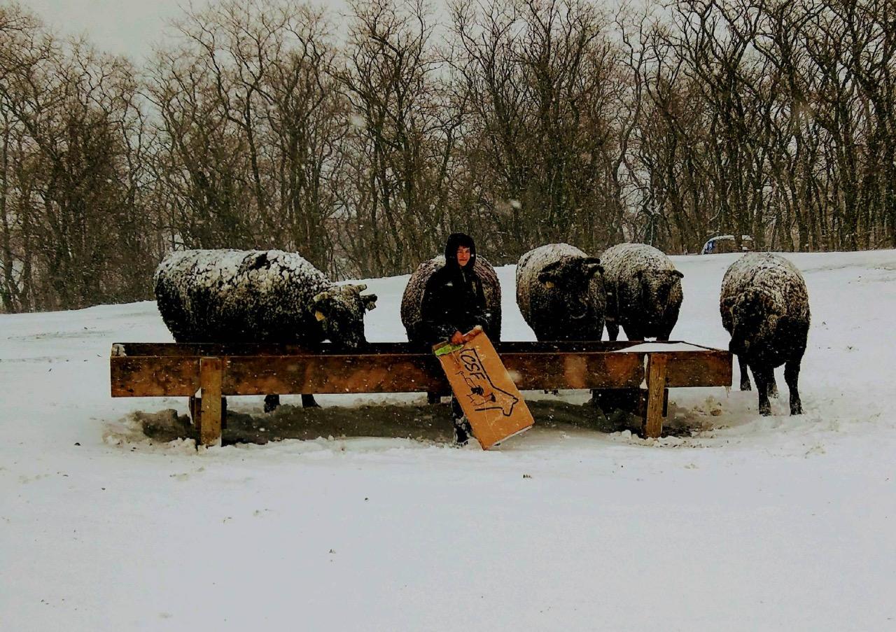 Winter at Craig Cattle