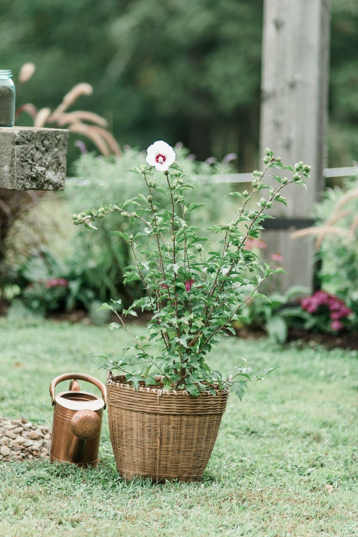 pennsylvania-backyard-wedding-love-diy-bohemian-romantic-colorful-0026.jpg