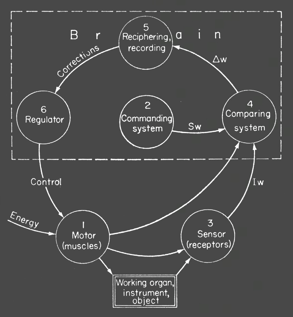 First control scheme in which is clearly shown feedback loop. (according to N. A Bernstein)
