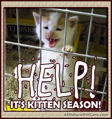 Kitten_Season-Animal_Shelter.jpg