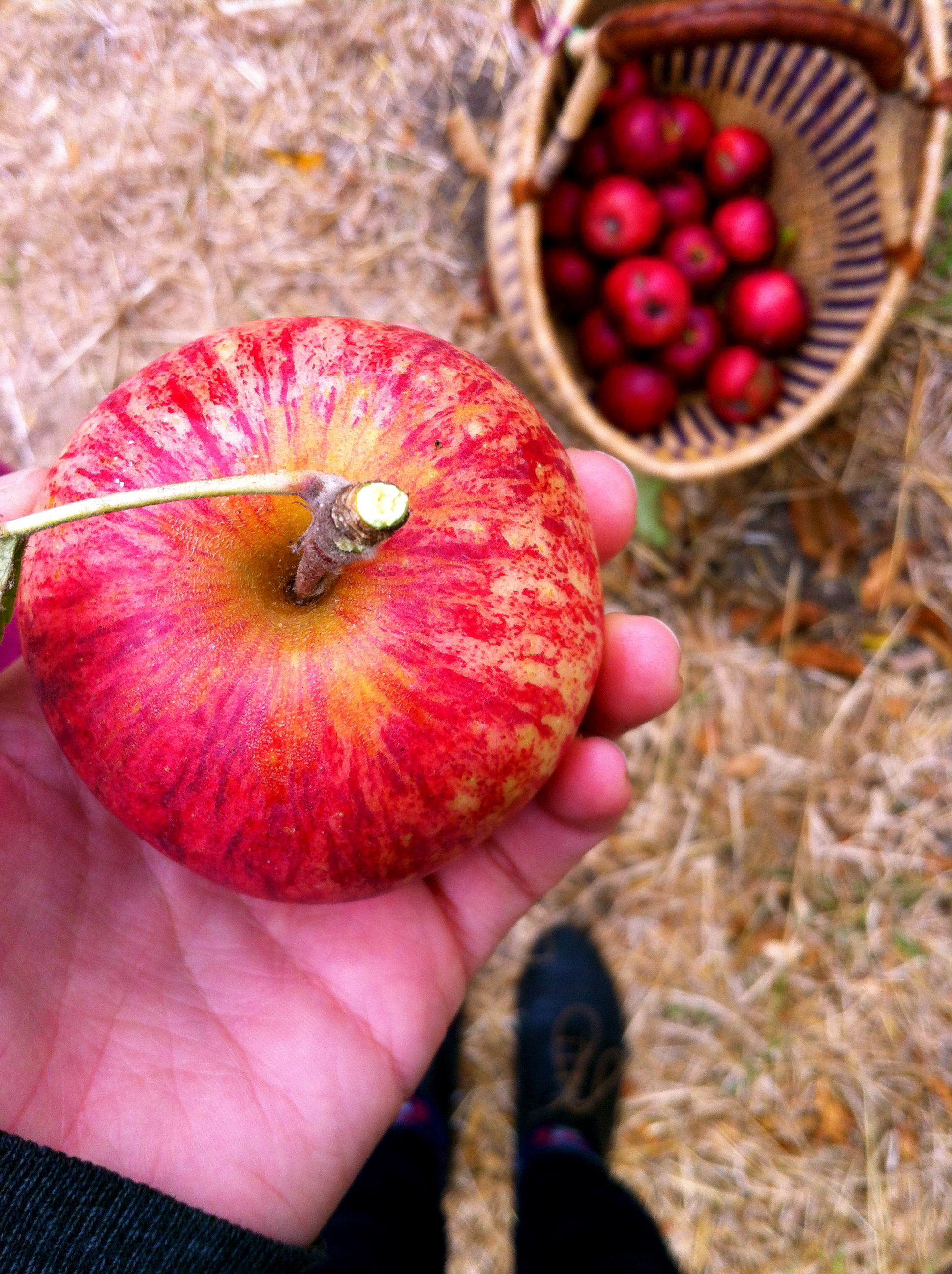 Fruit Trees: Apple in Hand.jpg