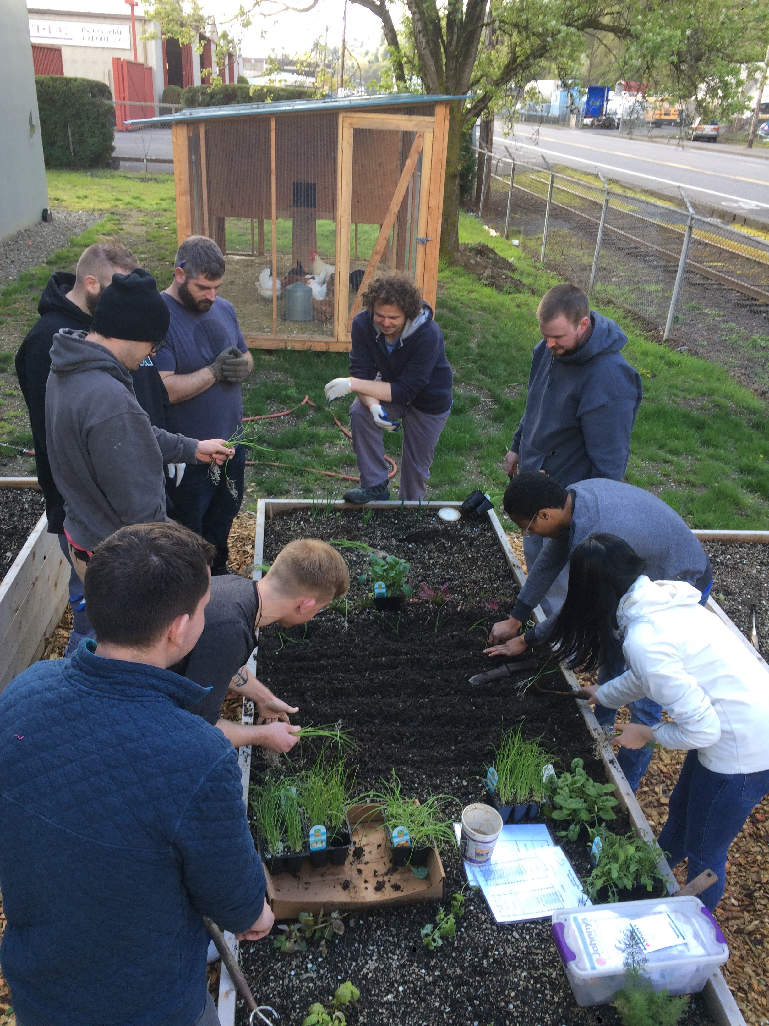 Another Spring planting with the employees at the Steviva Ingredients garden