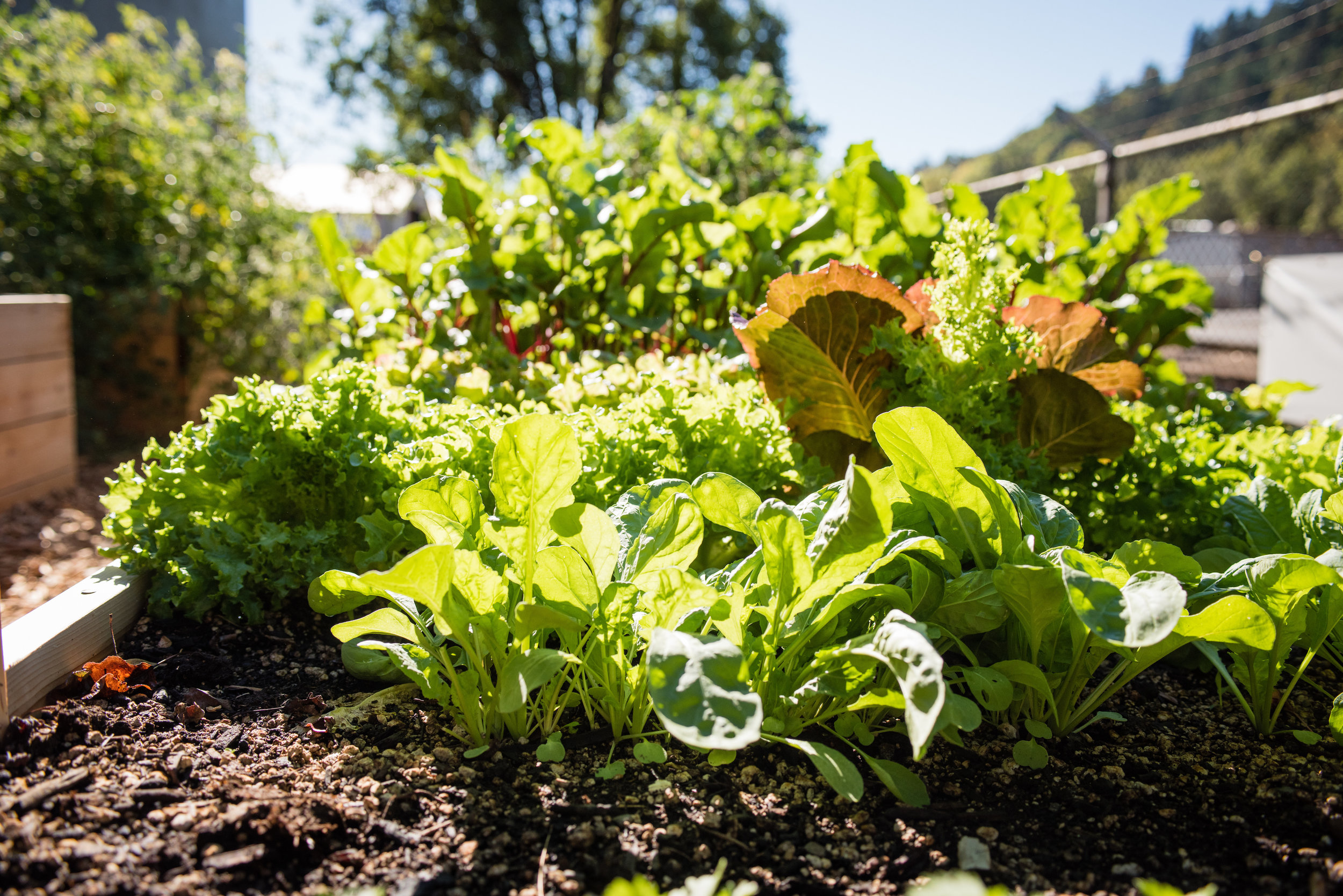 Best Vegetables To Plant In Your Spring Garden Portland Edible