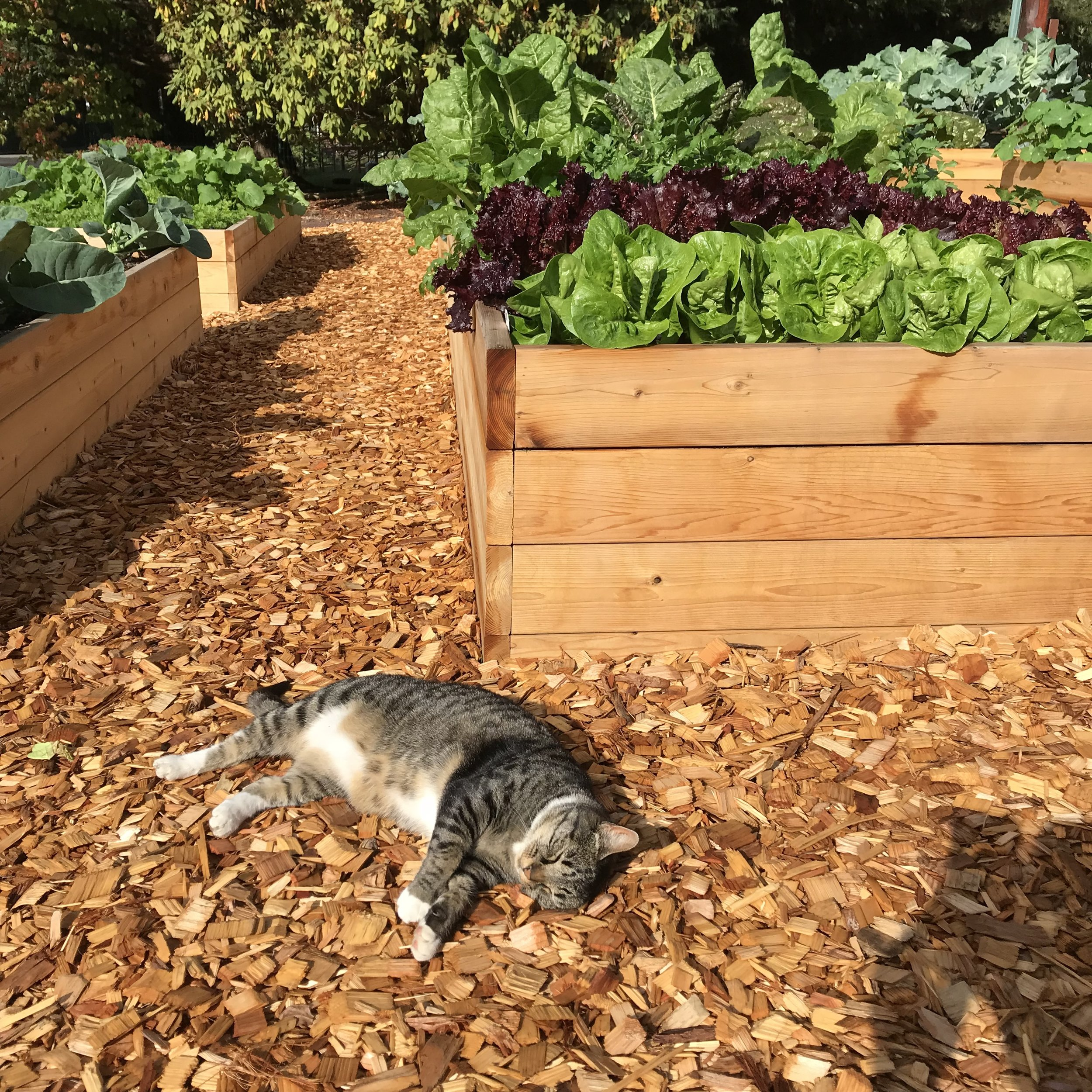 Snoozing in the vegetable garden