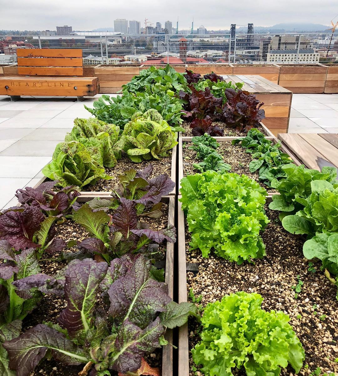 Pearl District Rooftop Apartment Vegetable Garden