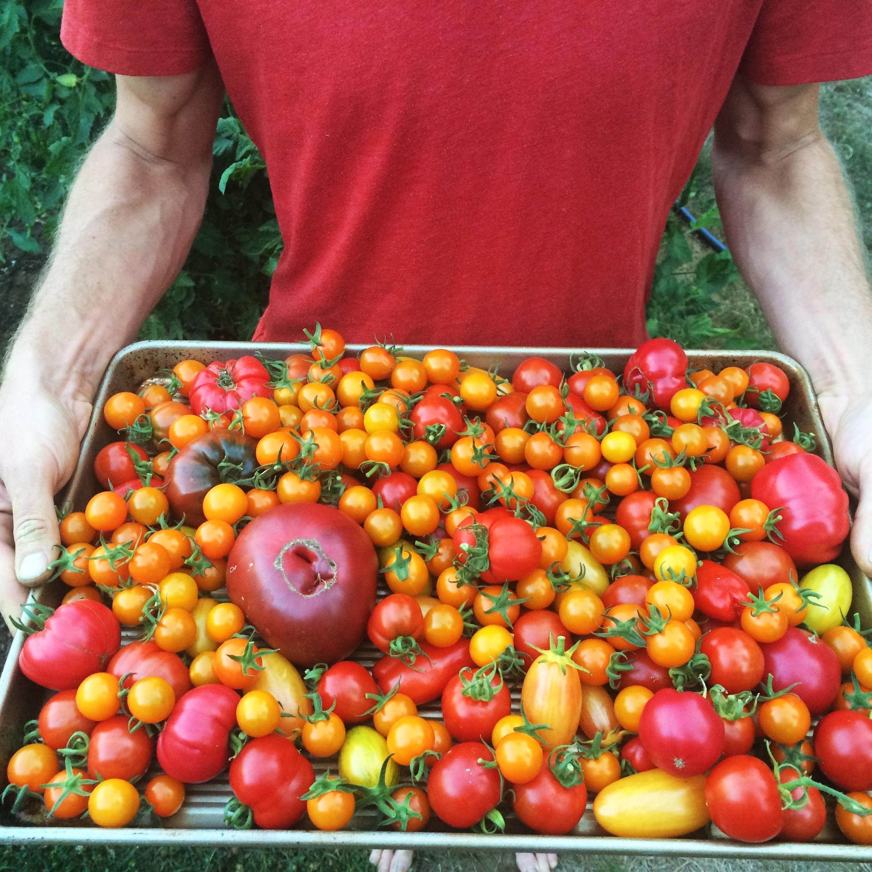 Tomato+Medley.jpg